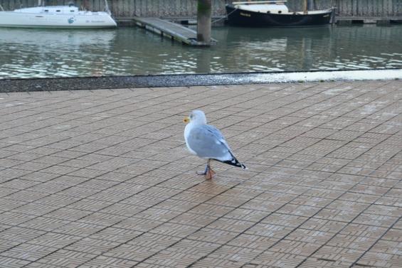 чайка на набережной Остенде