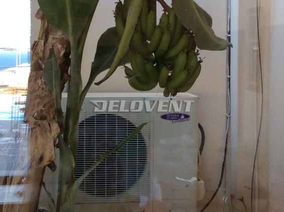 кондиционер для сушки бананов